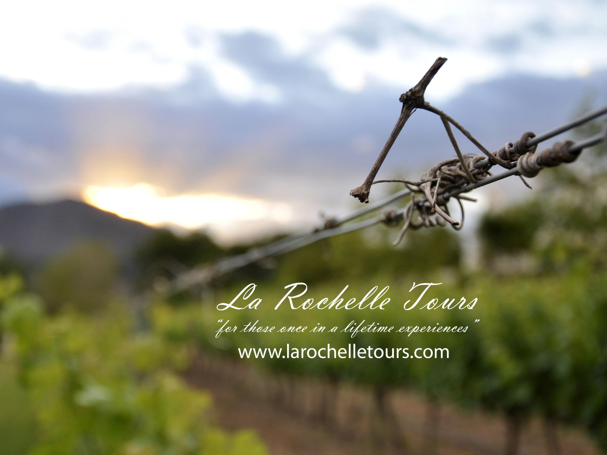 Vineyard - La Rochelle Tours - Franschhoek Vineyard Hopper