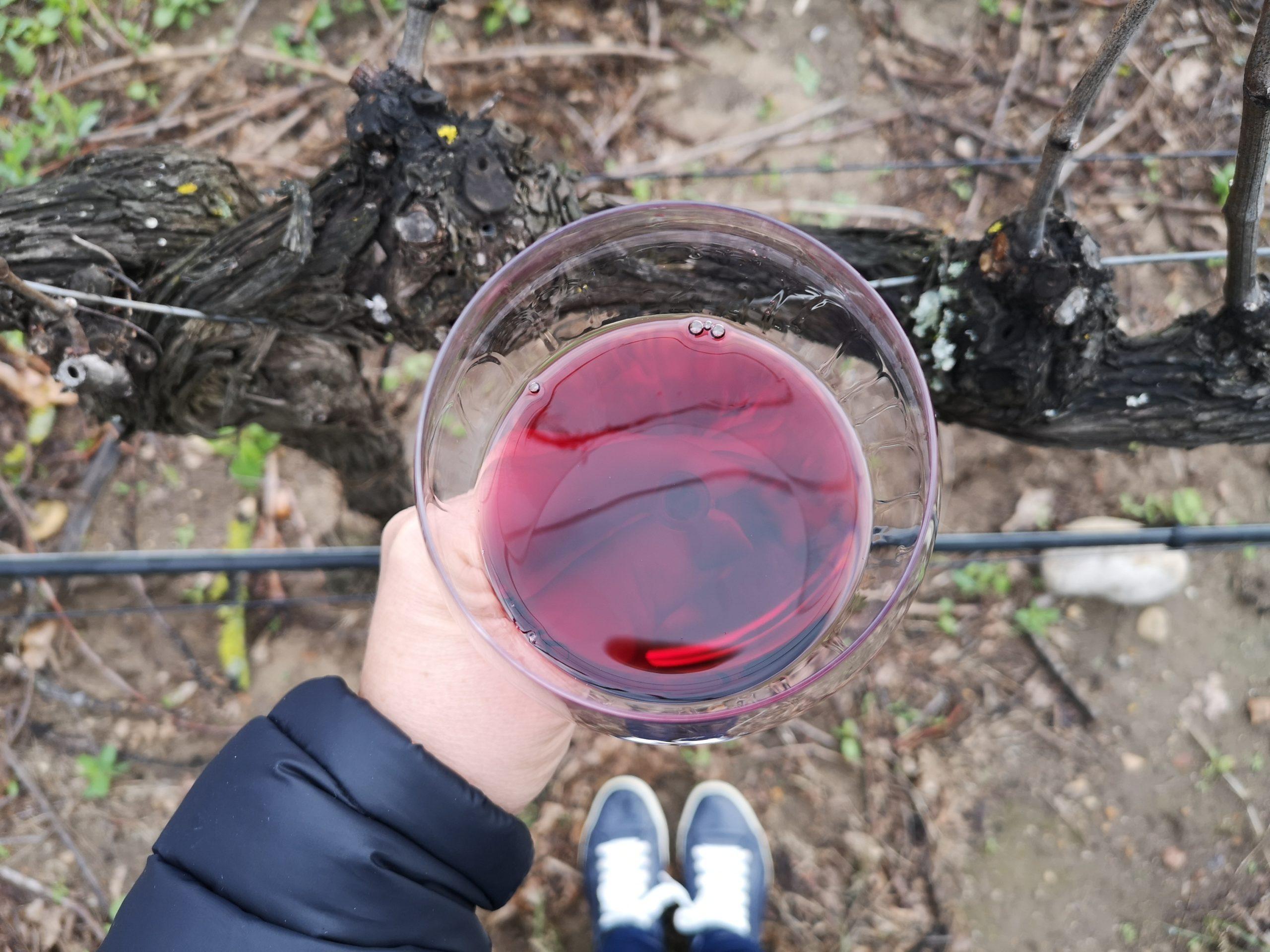 Wine in the Vineyard - Franschhoek Vineyardf Hopper